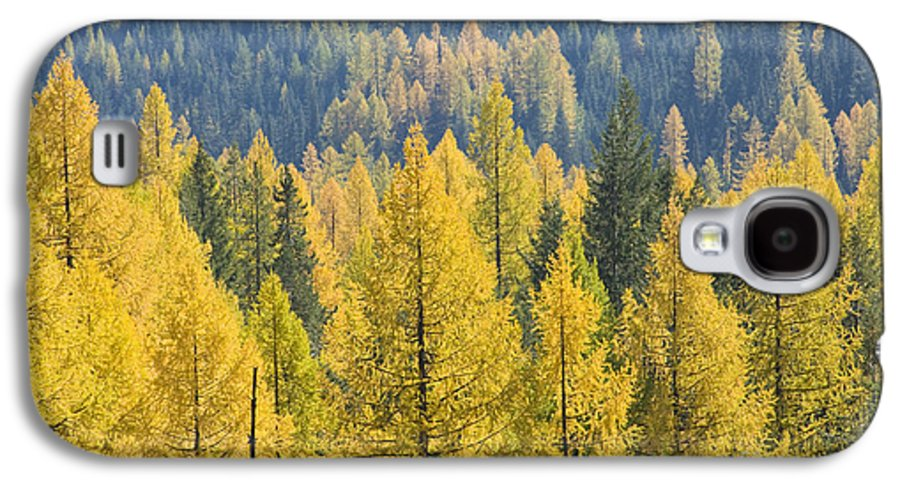Trees Galaxy S4 Case featuring the photograph North Idaho Gold by Idaho Scenic Images Linda Lantzy