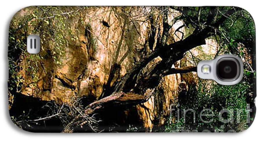 Trees Galaxy S4 Case featuring the photograph Old Tree by Kathy McClure