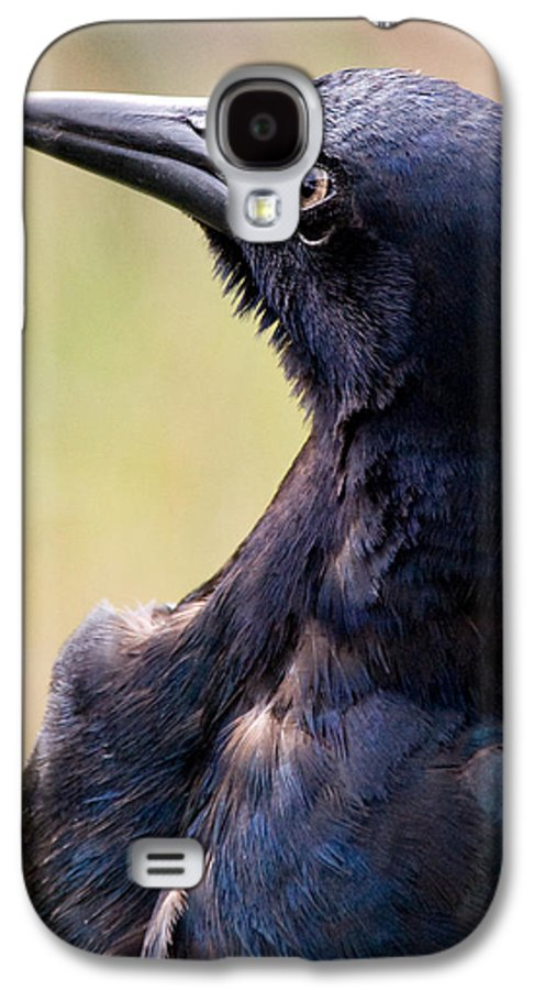 Bird Galaxy S4 Case featuring the photograph On Alert by Christopher Holmes