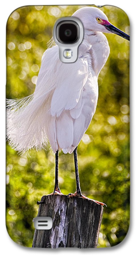 snowy Egret Galaxy S4 Case featuring the photograph On Watch by Christopher Holmes