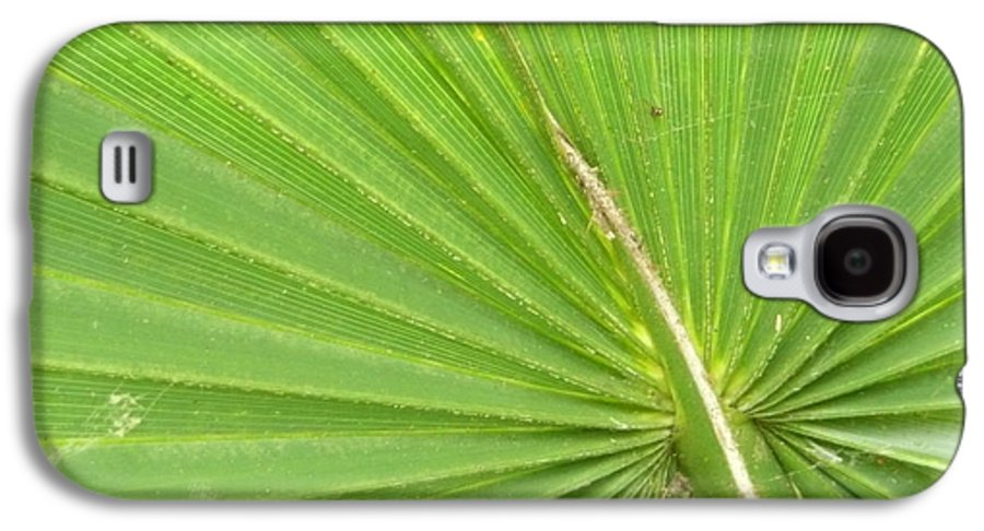 Palmetto Galaxy S4 Case featuring the photograph Palmetto II by Kathy Schumann