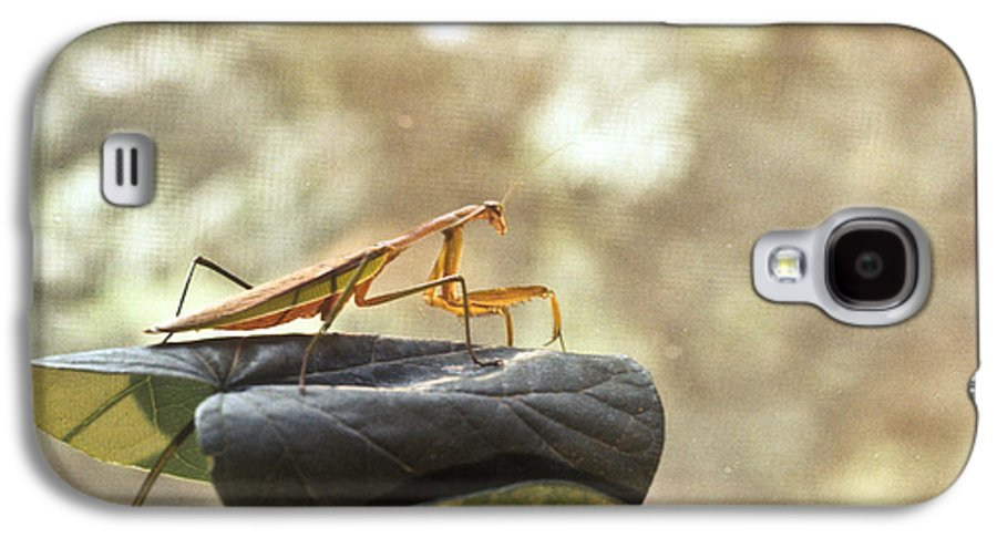 Praying Galaxy S4 Case featuring the photograph Pensive Mantis by Douglas Barnett