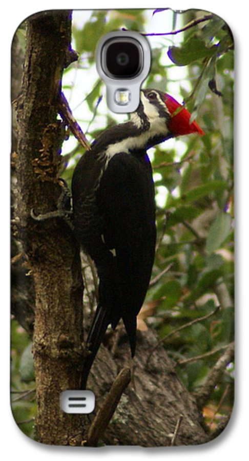 Bird Galaxy S4 Case featuring the painting Pileated Woodpecker by Debbie May