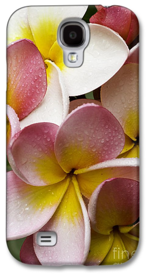 Pink Frangipani Galaxy S4 Case featuring the photograph Pink Frangipani by Avalon Fine Art Photography
