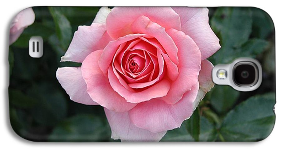 Rose Galaxy S4 Case featuring the photograph Pink Rose by Dave Martsolf