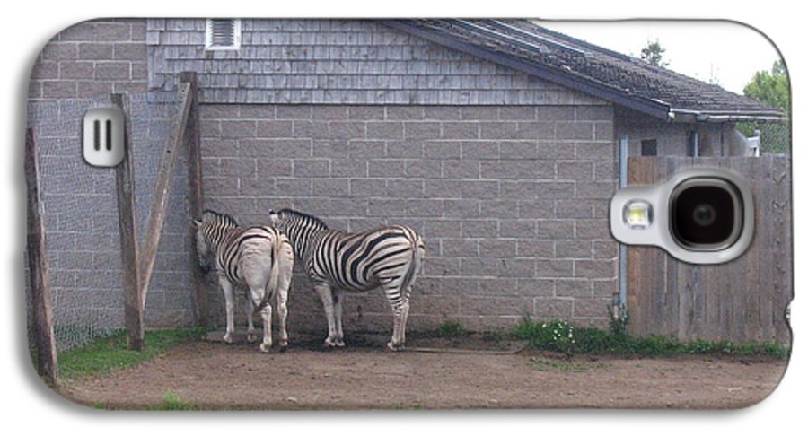 Zebra Galaxy S4 Case featuring the photograph Plains Zebras In The Corner by Melissa Parks