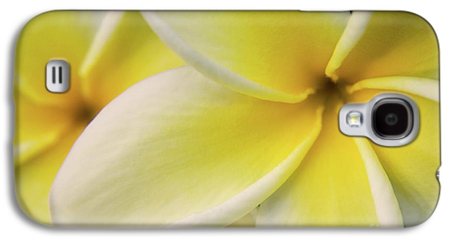 Nature Galaxy S4 Case featuring the photograph Plumeria Flowers by Julia Hiebaum