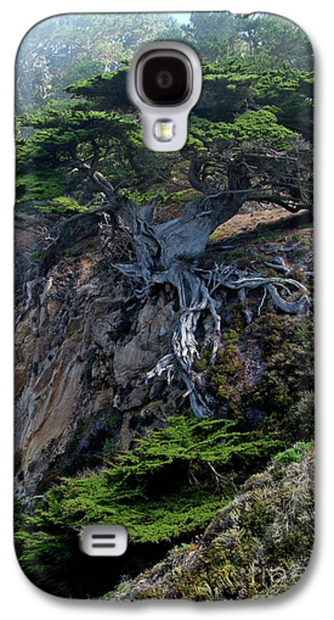 Landscape Galaxy S4 Case featuring the photograph Point Lobos Veteran Cypress Tree by Charlene Mitchell