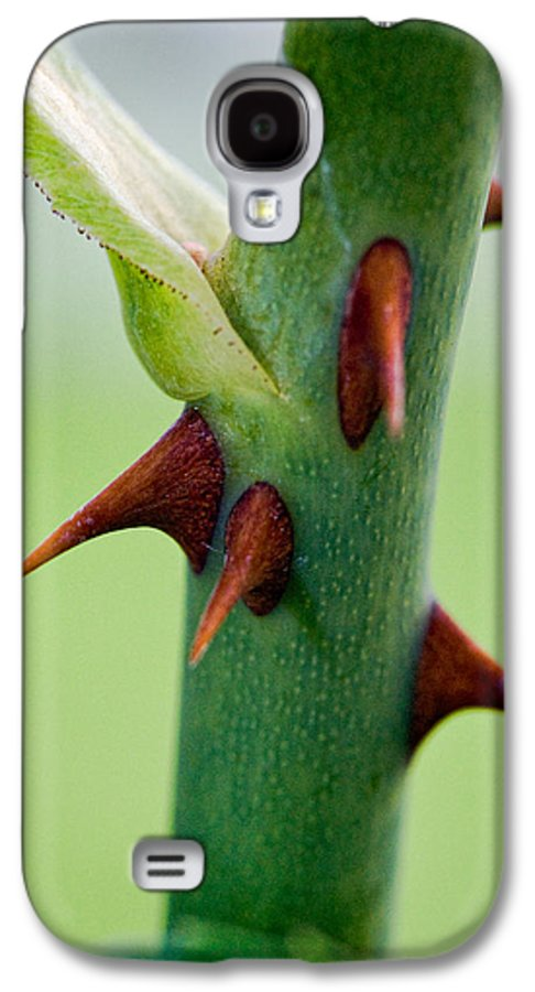 Thorns Galaxy S4 Case featuring the photograph Pointed Personality by Christopher Holmes