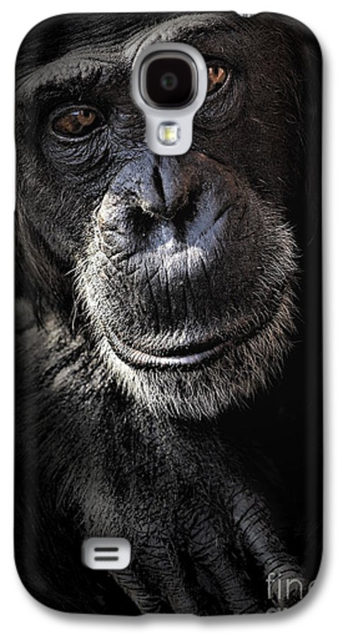 Chimp Galaxy S4 Case featuring the photograph Portrait Of A Chimpanzee by Avalon Fine Art Photography