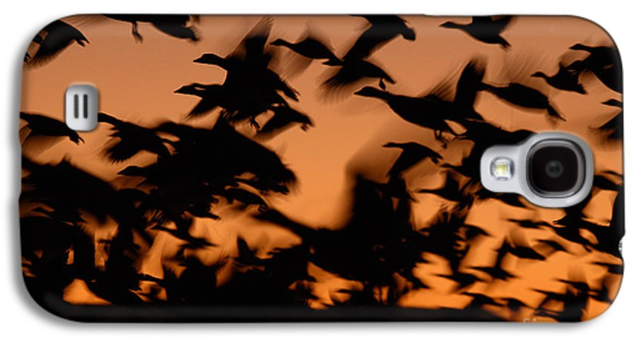Geese Galaxy S4 Case featuring the photograph Pre-dawn Flight Of Snow Geese Flock by Max Allen