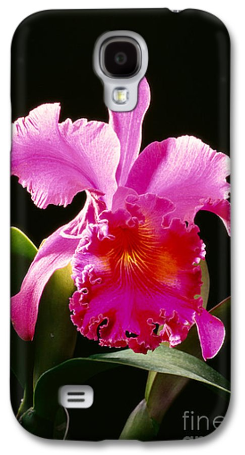 Arrange Galaxy S4 Case featuring the photograph Purple Cattleya by Tomas del Amo - Printscapes