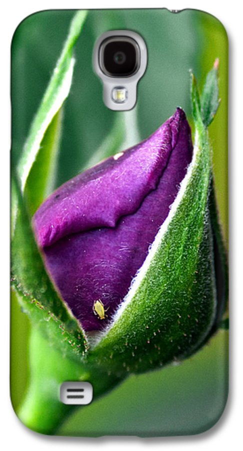 Rose Galaxy S4 Case featuring the photograph Purple Rose Bud by Christopher Holmes