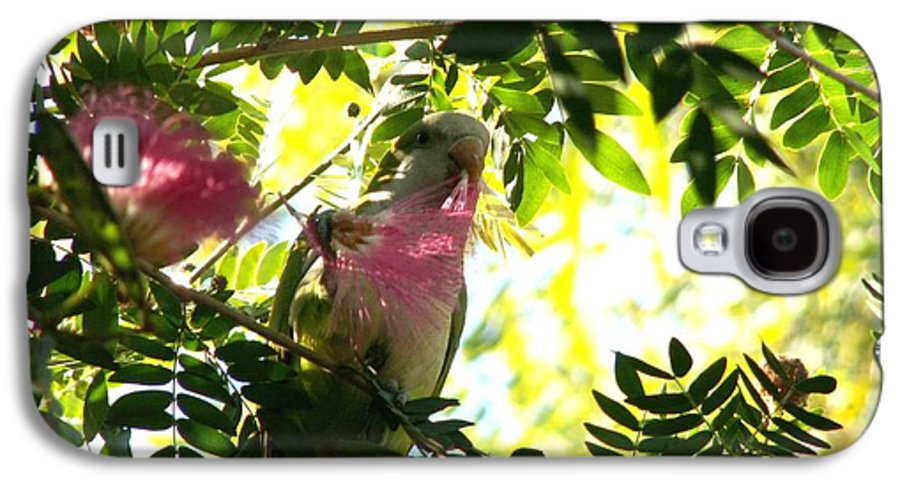 Quaker Parrot Galaxy S4 Case featuring the photograph Quaker Parrot With Mimosa Flower by Theresa Willingham