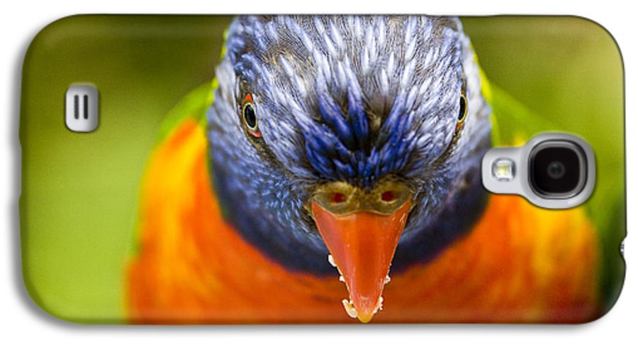 Rainbow Lorikeet Galaxy S4 Case featuring the photograph Rainbow Lorikeet by Avalon Fine Art Photography