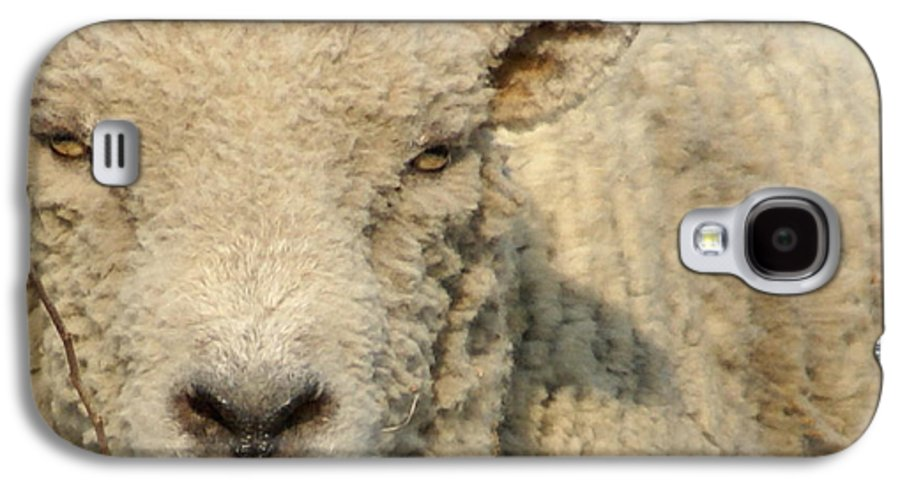 Farm Animal Galaxy S4 Case featuring the photograph Ramsy - Debbie-may by Debbie May
