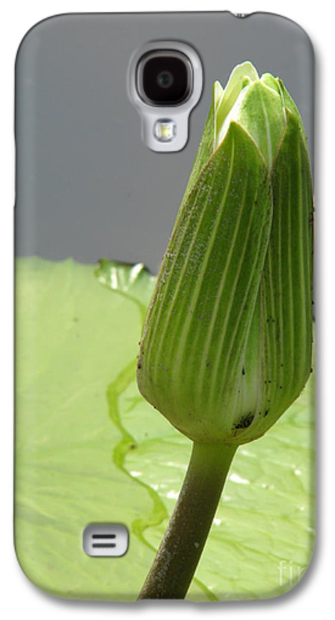 Lilly Galaxy S4 Case featuring the photograph Ready To Bloom by Amanda Barcon