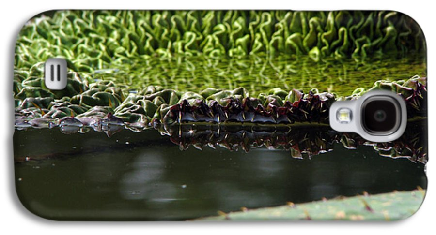 Lillypad Galaxy S4 Case featuring the photograph Ready To Spread by Amanda Barcon