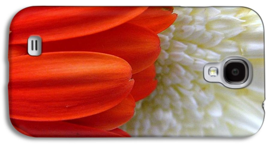 Flowers Galaxy S4 Case featuring the photograph Red And White by Rhonda Barrett