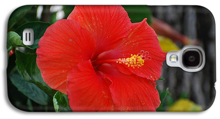 Flowers Galaxy S4 Case featuring the photograph Red Flower by Rob Hans