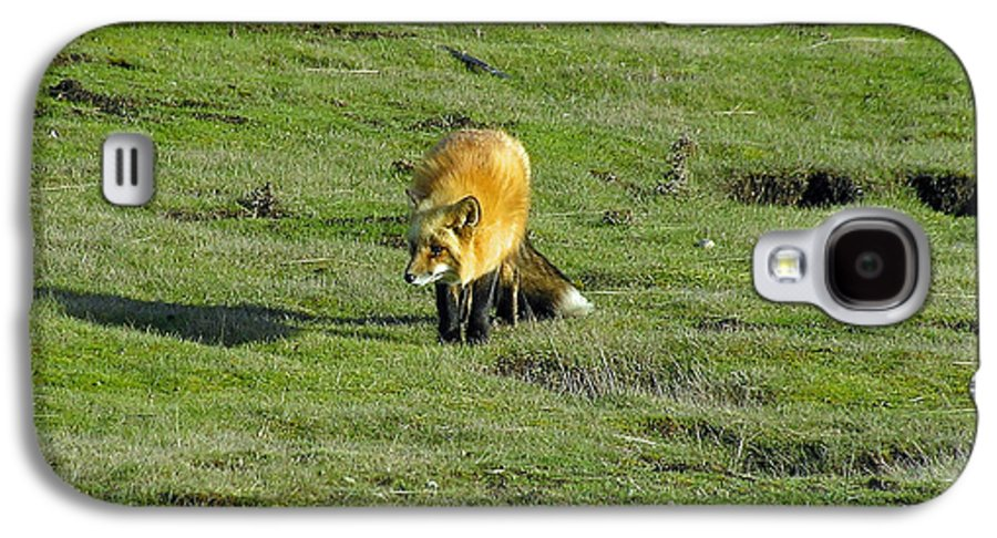 Fox Galaxy S4 Case featuring the photograph Red Fox by Louise Magno