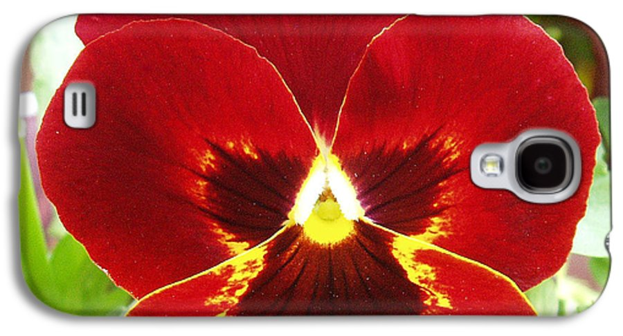 Red Galaxy S4 Case featuring the photograph Red Pansy by Nancy Mueller