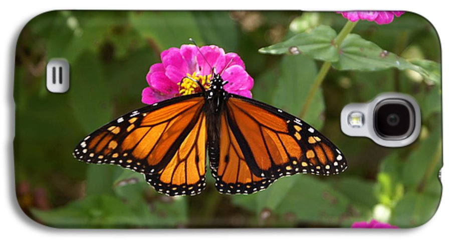 Butterfly Galaxy S4 Case featuring the painting Resting by Debbie May