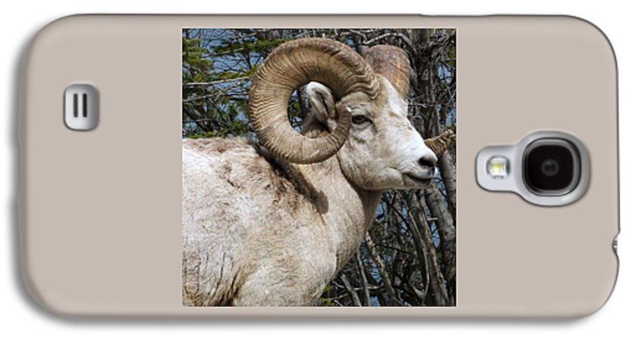 Wildlife Galaxy S4 Case featuring the photograph Rocky Mountain Ram by Tiffany Vest