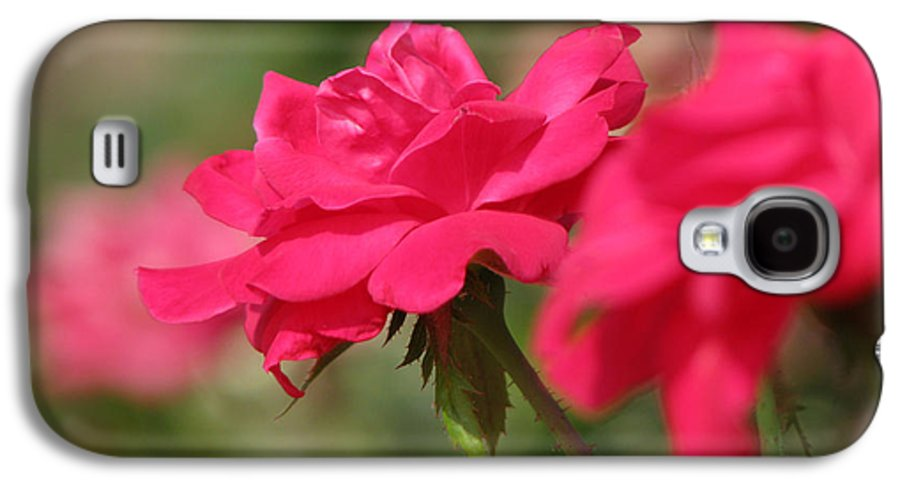 Rose Galaxy S4 Case featuring the photograph Roses by Amanda Barcon