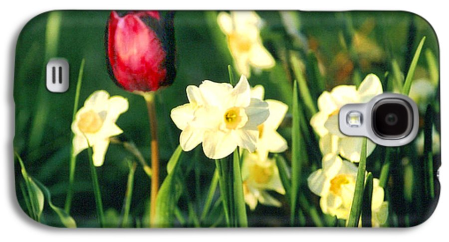 Tulips Galaxy S4 Case featuring the photograph Royal Spring by Steve Karol
