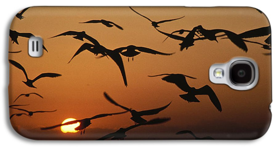 Birds Galaxy S4 Case featuring the photograph Seagulls In Sunset by Carl Purcell