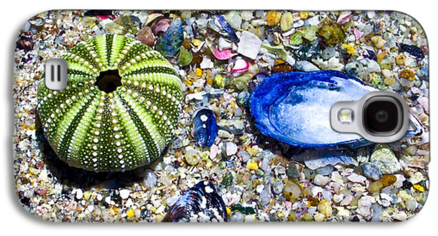 Seashore Galaxy S4 Case featuring the photograph Seashore Colors by Douglas Barnett