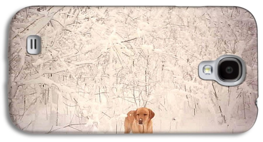 Winter Galaxy S4 Case featuring the photograph Shamee by Kathy Schumann