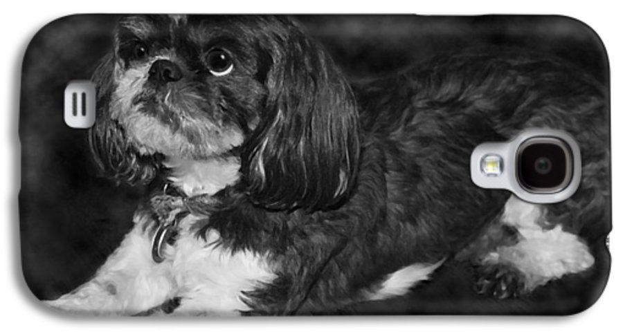 3scape Galaxy S4 Case featuring the painting Shih Tzu by Adam Romanowicz