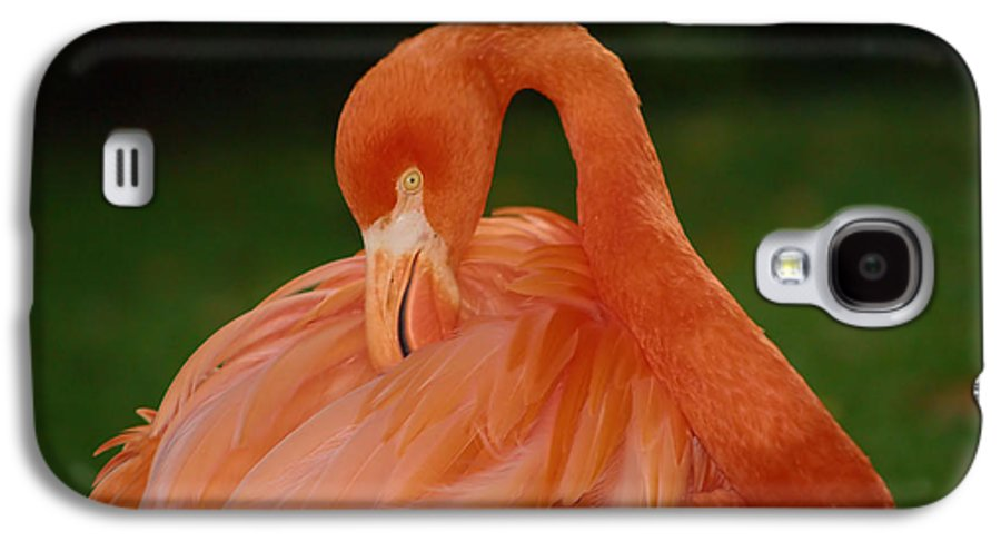 Flamingo Galaxy S4 Case featuring the photograph shy by Gaby Swanson