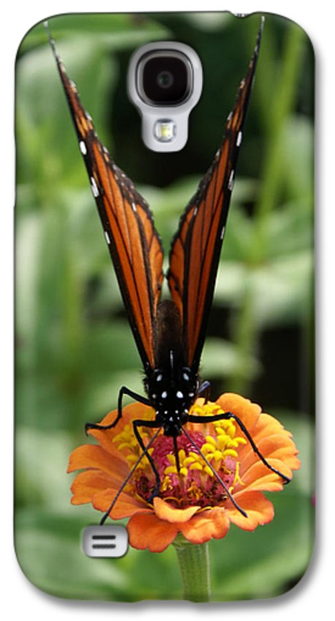 Butterflies Galaxy S4 Case featuring the painting Sip Sip Away by Debbie May