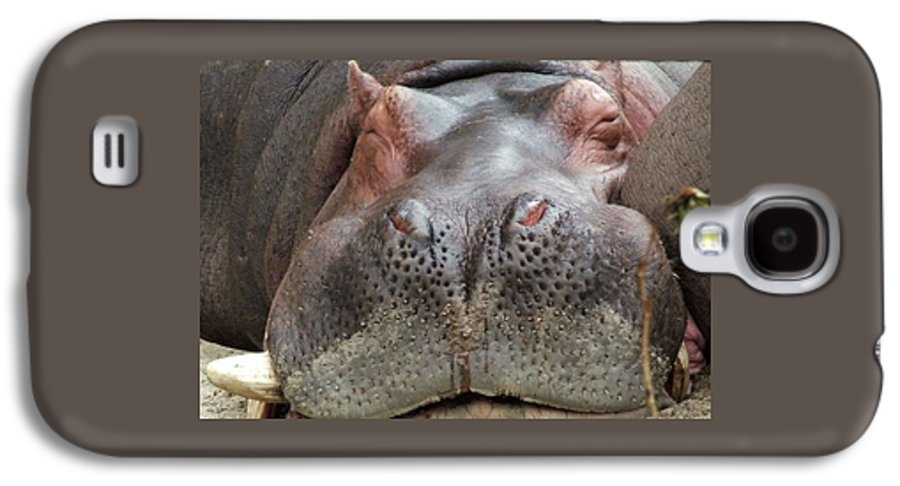 Hippopotamus Galaxy S4 Case featuring the photograph Sleeping Hippo by Tiffany Vest