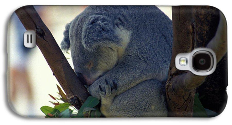 Sleep Galaxy S4 Case featuring the photograph Sleepy Koala Bear by Carl Purcell
