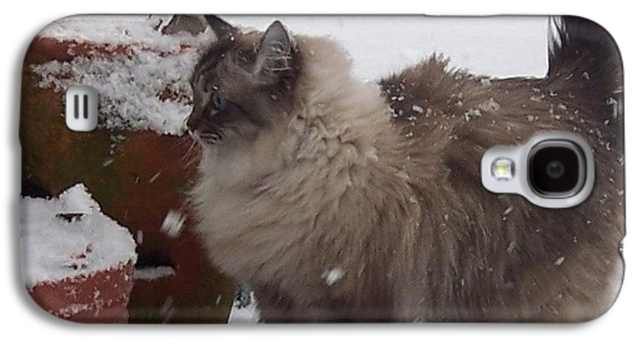 Cats Galaxy S4 Case featuring the photograph Snow Kitty by Debbi Granruth