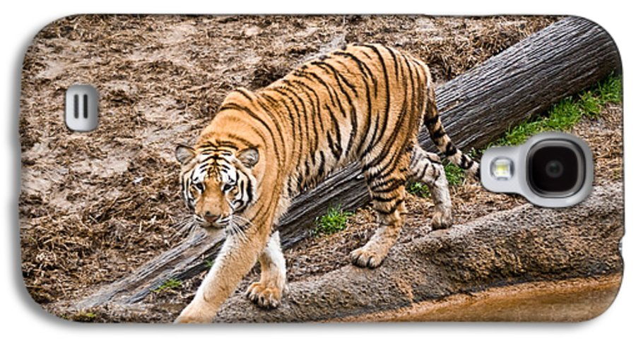Tiger Galaxy S4 Case featuring the photograph Stalking Tiger - Bengal by Douglas Barnett