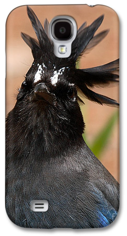 Jay Galaxy S4 Case featuring the photograph Stellar's Jay With Rock Star Hair by Max Allen