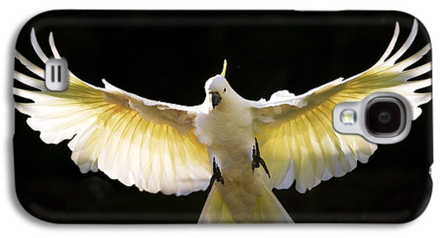 Sulphur Crested Cockatoo Australian Wildlife Galaxy S4 Case featuring the photograph Sulphur Crested Cockatoo In Flight by Sheila Smart Fine Art Photography