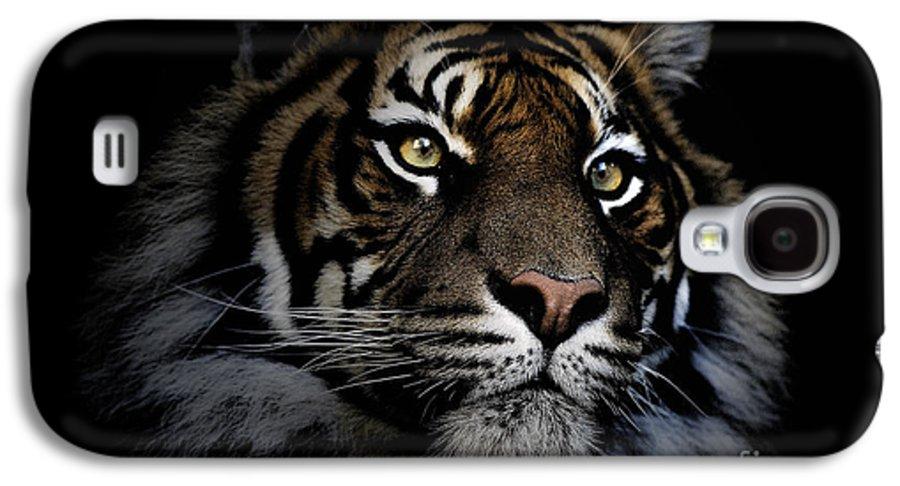 Sumatran Tiger Wildlife Endangered Galaxy S4 Case featuring the photograph Sumatran Tiger by Sheila Smart Fine Art Photography