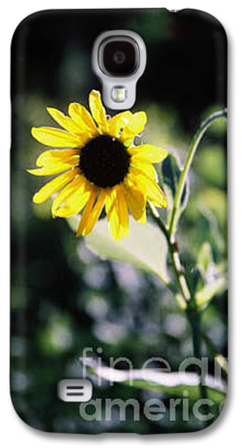 Sunflower Galaxy S4 Case featuring the photograph Summer Sunshine by Kathy McClure