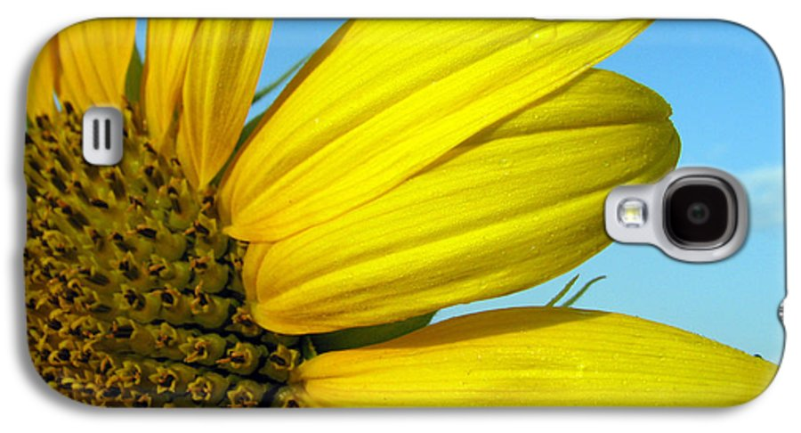 Sunflowers Galaxy S4 Case featuring the photograph Sunflower by Amanda Barcon