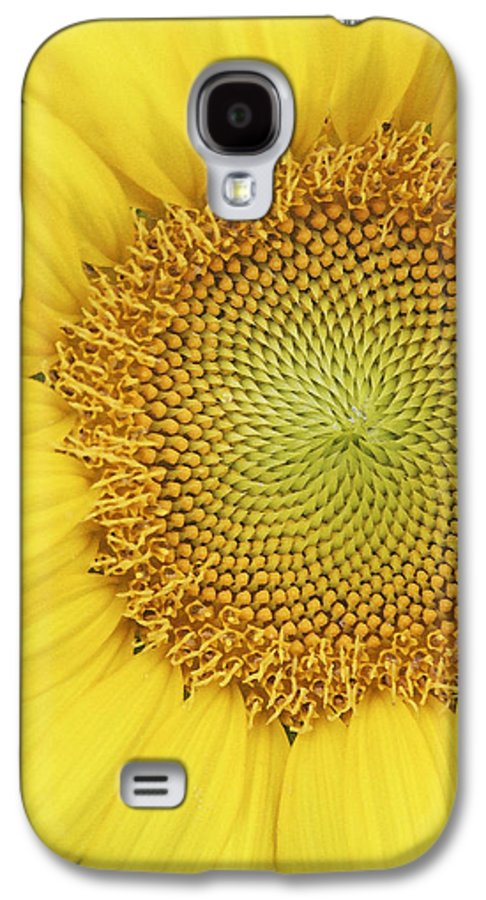 Sunflower Galaxy S4 Case featuring the photograph Sunflower by Margie Wildblood