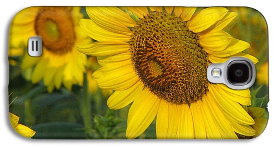 Sunflowers Galaxy S4 Case featuring the photograph Sunflower Series by Amanda Barcon