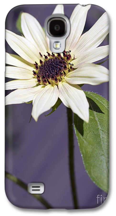Helianthus Annus Galaxy S4 Case featuring the photograph Sunflower by Tony Cordoza