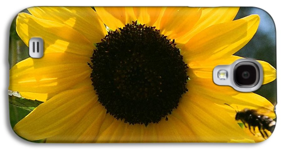Flower Galaxy S4 Case featuring the photograph Sunflower With Bee by Dean Triolo