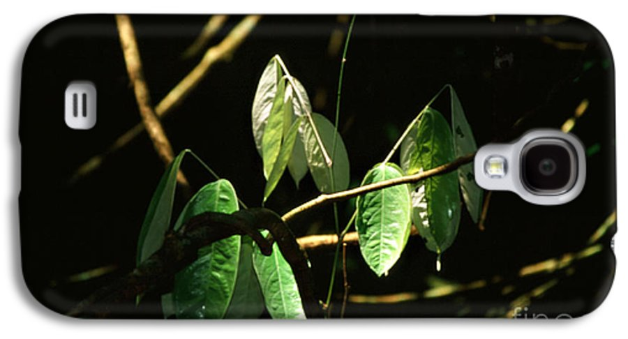 Leaves Galaxy S4 Case featuring the photograph Sunlit Leaves by Kathy McClure